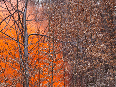 Ondrej Chmel Photography | Colourful Mist | A tree, leaves and orange smoke bombs, April