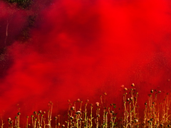 Ondrej Chmel Photography | Colourful Mist | Thistle field and red smoke bombs, July